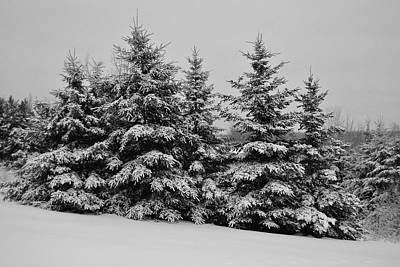 Art Print featuring the photograph Frosted Trees by Kathleen Sartoris