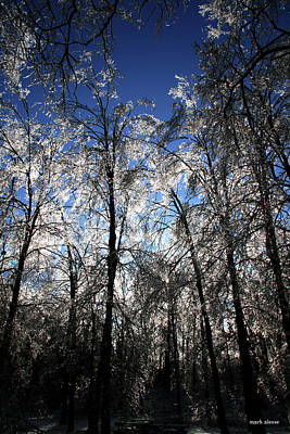Photograph - Frosted Trees by Mark Alesse