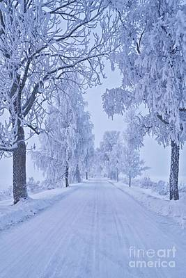 Winter Roads Photograph - Frosted Trees by Veikko Suikkanen