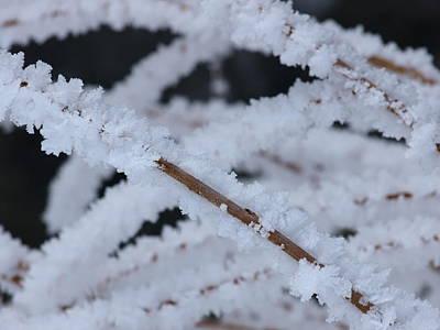 Frosted Twigs Art Print by DeeLon Merritt