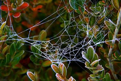 Photograph - Frosted Web by Kathryn Meyer