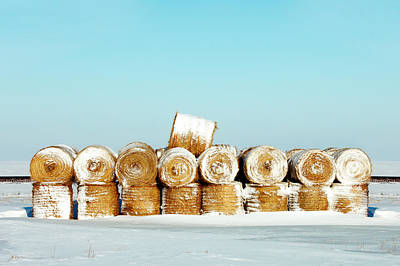 Harvest Photograph - Frosted Wheats by Todd Klassy