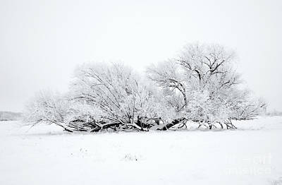 Photograph - Frosted White by Mike Dawson