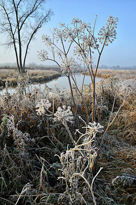 Photograph - Frosted Wildflowers Along Nippersink Creek by Ray Mathis