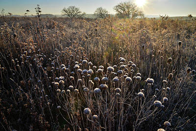 Photograph - Frosted Wildflowers At Prairieview Education Center by Ray Mathis