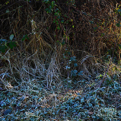Photograph - Frostings 2 by Paul Davenport