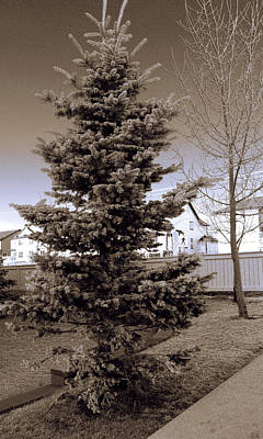 Photograph - Frosty 2 by Elisabeth Dubois