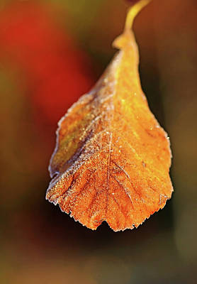Photograph - Frosty Autumn Leaf by Debbie Oppermann