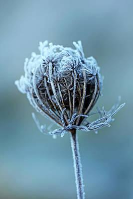 Photograph - Frosty Blue by Debbie Oppermann