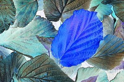 Photograph - Frosty Blues by Frank Townsley