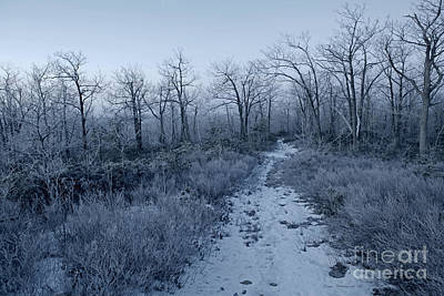 Photograph - Frosty Dawn Mysterious Snowy Path by John Stephens