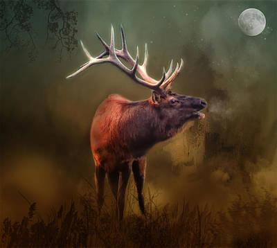 Photograph - Frosty Evening Elk by Bernadette Chiaramonte