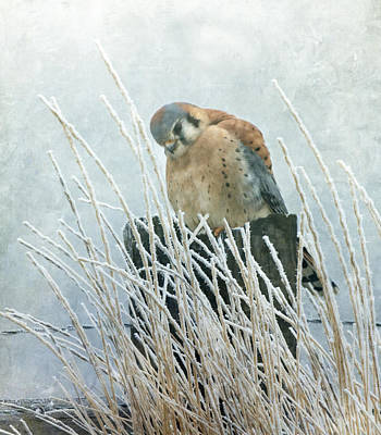 Photograph - Frosty Falcon by Angie Vogel