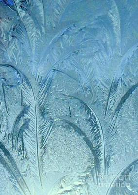 Photograph - Frosty Feathers by Frank Townsley