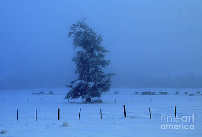 Photograph - Frosty Field by Roland Stanke