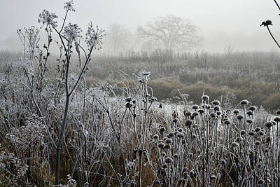Photograph - Frosty Foggy Morning In Glacial Park by Ray Mathis