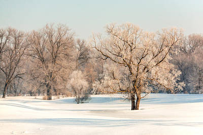 Christmas Holiday Scenery Photograph - Frosty Forest by Todd Klassy