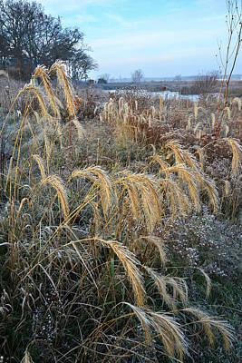 Photograph - Frosty Foxtails In Glacial Park by Ray Mathis