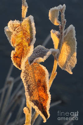 Photograph - Frosty Fringe by Frank Townsley
