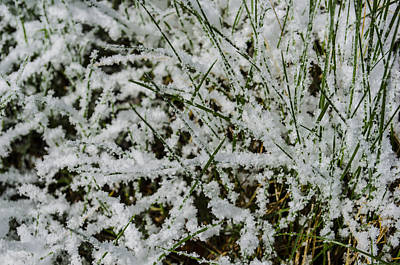 Photograph - Frosty Grass by Deborah Smolinske