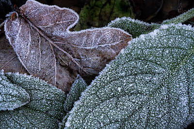Photograph - Frosty Lace by Shirley Mitchell