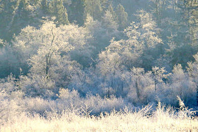 Photograph - Frosty Lake Shore by Frank Townsley