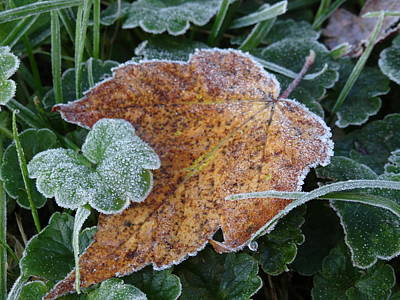 Photograph - Frosty Leaf by Amanda Balough