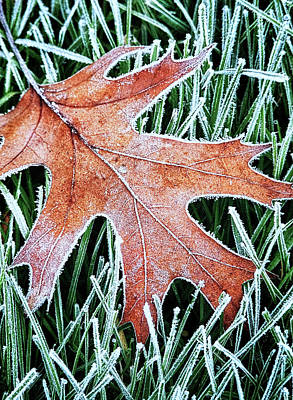 Photograph - Frosty Leaf by Carolyn Derstine
