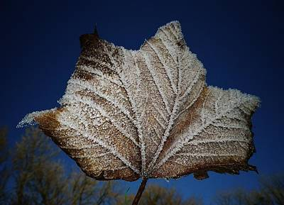 Photograph - Frosty Leaf by Richard Brookes