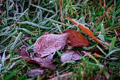 Photograph - Frosty Leaf by Rick Berk