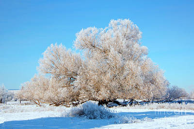 Hoar Frost Photograph - Frosty  by Mike Dawson