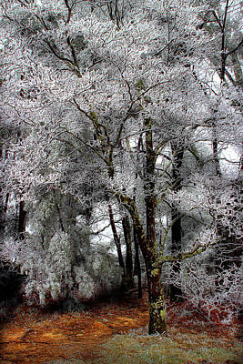 Photograph - Frosty by Mike Eingle