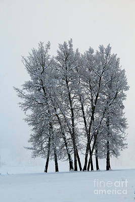 Photograph - Frosty Morn by Roland Stanke