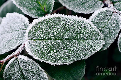 Photograph - Frosty Morning 2 by Terry Elniski