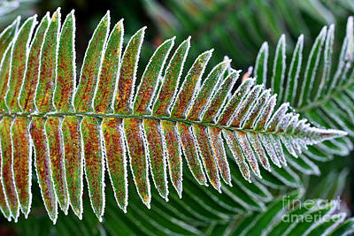 Photograph - Frosty Morning 3 by Terry Elniski