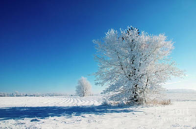 Photograph - Frosty Morning In Indiana by David Arment