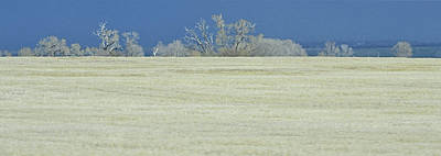 Photograph - Frosty Morning Landscape by Nadalyn Larsen