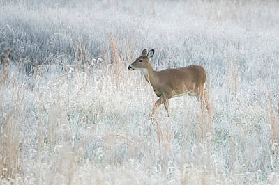 Photograph - Frosty Morning by Linda Shannon Morgan
