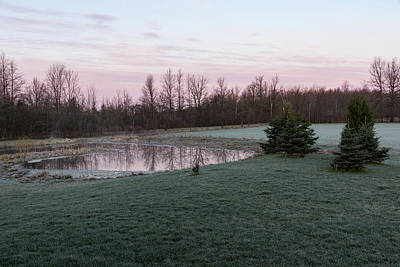 Photograph - Frosty Morning - Quiet Pinks And Greens At The Pond by Georgia Mizuleva