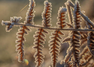Photograph - Frosty Morning by Robert Potts