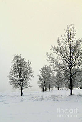 Photograph - Frosty Morning by Roland Stanke
