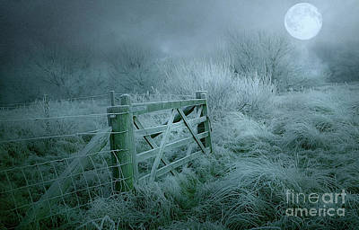 Photograph - Frosty Night by Brian Tarr