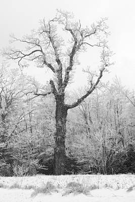 Photograph - Frosty Old Tree by Ken Barrett
