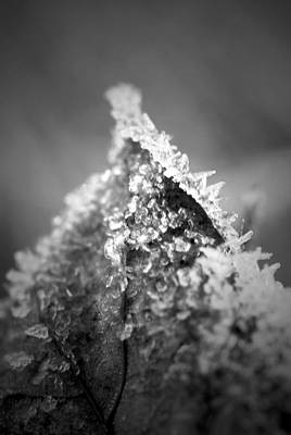 Photograph - Frosty Peak B N W by Richard Andrews