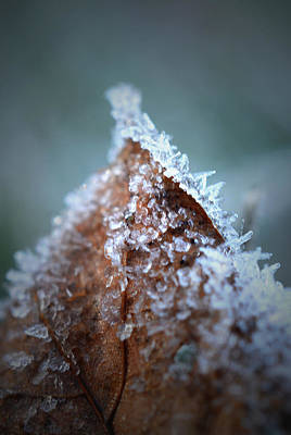 Photograph - Frosty Peak by Richard Andrews