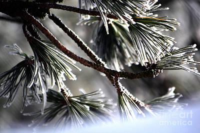Frosty Pine Tree - Winter In Switzerland Art Print