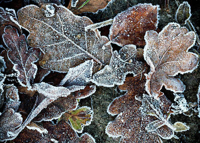 Photograph - Frosty  by Shirley Mitchell
