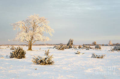 Photograph - Frosty Solitude Tree In The First Morning Sunshine by Kennerth and Birgitta Kullman