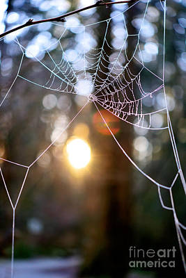 Photograph - Frosty Spider Web by Terry Elniski