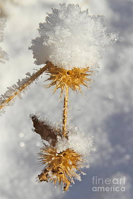 Ice Spikes Photograph - Frosty Spikes by Rick  Monyahan
